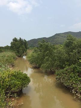 红树林保护区