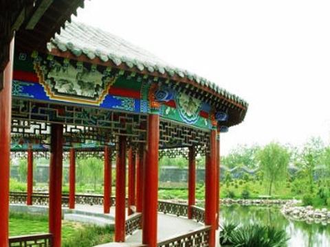濮阳毛楼生态旅游区旅游景点图片