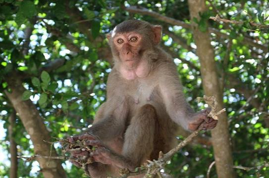 猴岛旅游景点图片