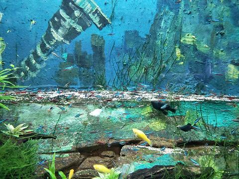 长沙海方海洋公园旅游景点图片