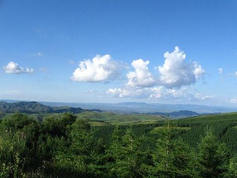 和平森林公园旅游景点图片