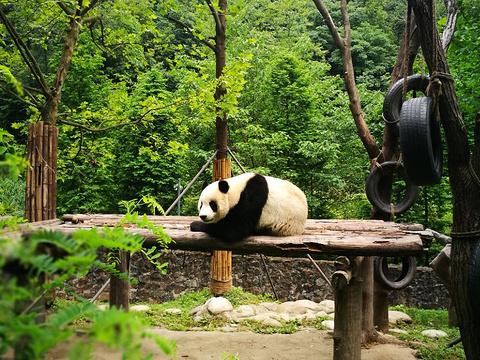 都江堰熊猫乐园景区旅游景点图片