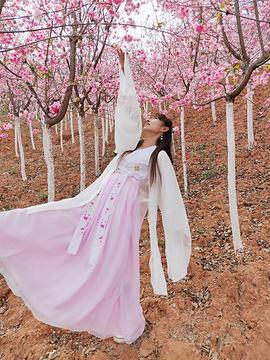 宜良樱花谷的图片