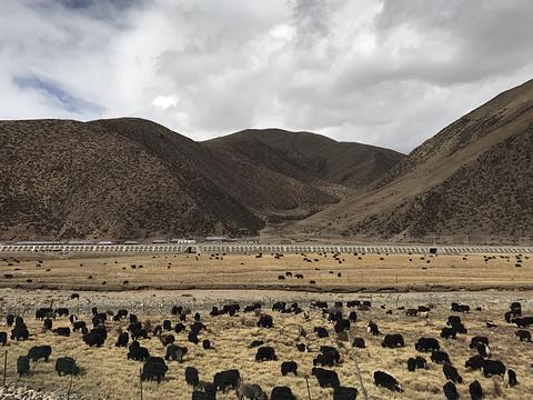 邦杰塘草原旅游景点图片