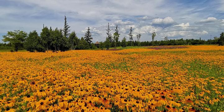 碱水河国家湿地公园旅游景点图片