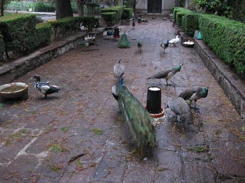 帕蒂诺博物馆旅游景点图片