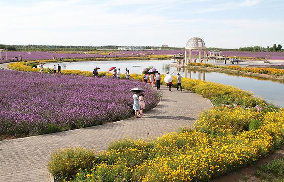 紫荆花广场旅游景点图片