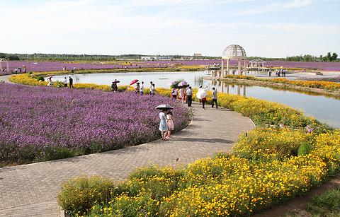 紫荆花广场的图片