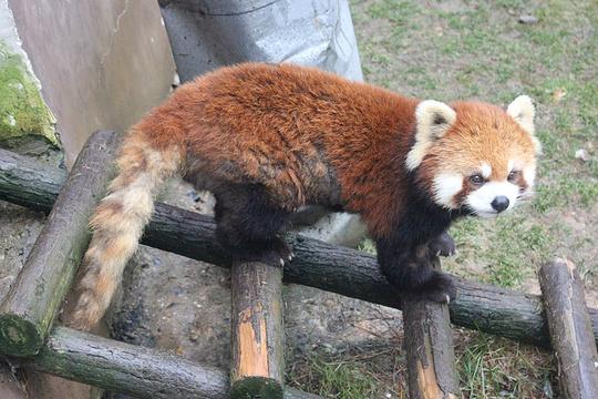 贵州森林野生动物园旅游景点图片