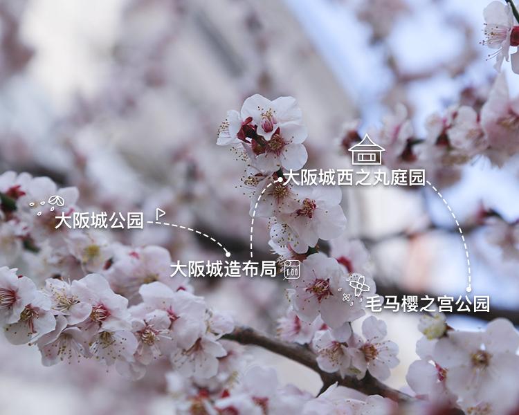大阪赏樱一日游,感受别样日式风情