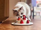 有猫腻咖啡馆