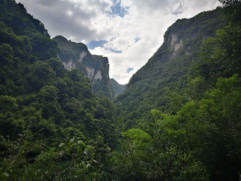 茂兰喀斯特森林保护区旅游景点图片