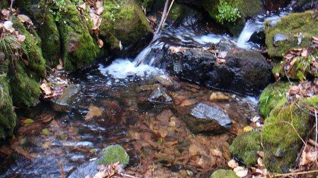 佛手山国家森林公园旅游景点图片