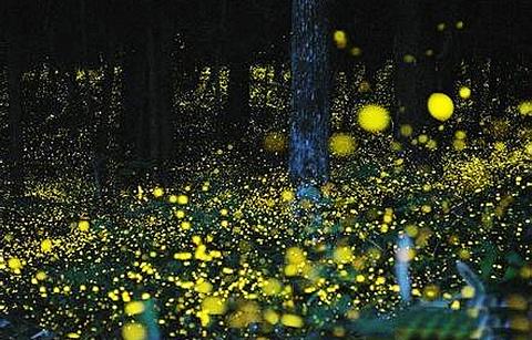 萤火虫主题公园