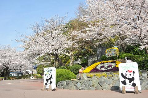 神户市立王子动物园的图片