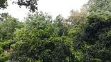 中缅边境公园