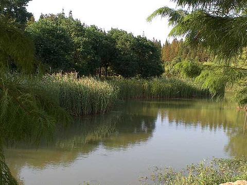 龙池国家森林公园旅游景点图片