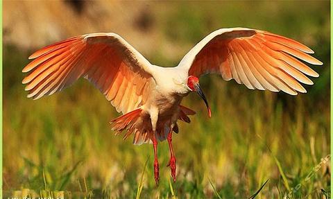 朱鹮自然保护区