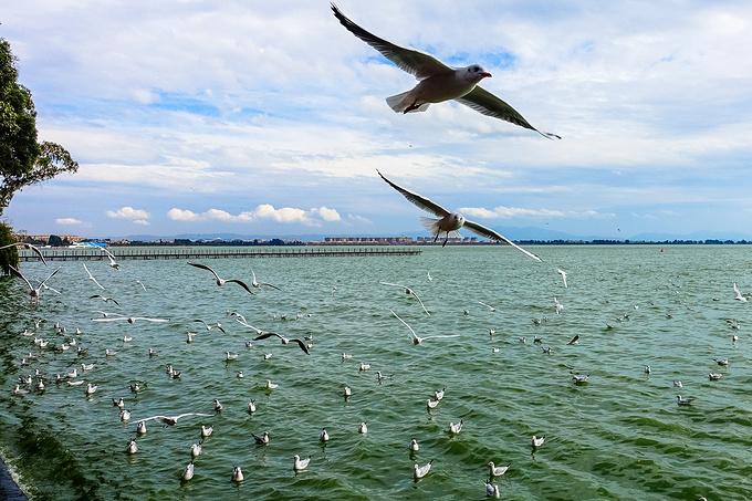滇池海埂公园@阿迅游世界