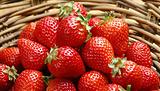 易家草莓园