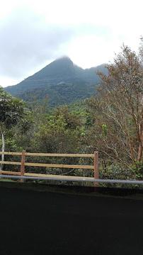 鹦哥岭的图片