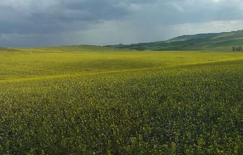 哈达门高原牧场