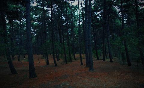 净月潭国家森林公园-小卖部