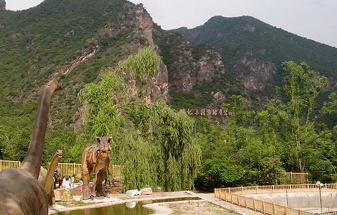 硅化木国家地质公园