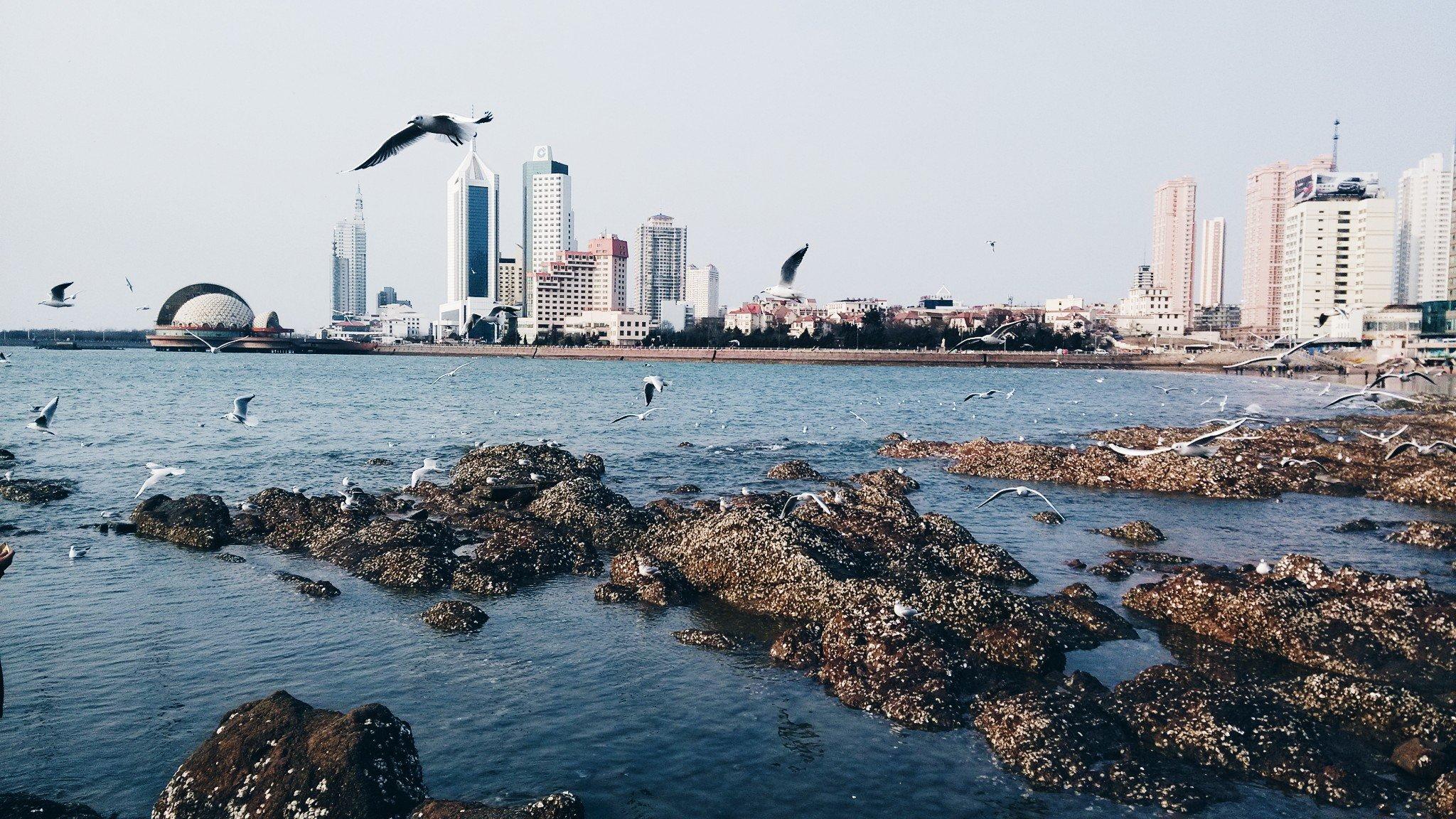 青岛喂海鸥1日线路