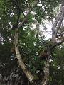 七仙岭雨林仙境酒店雨林餐厅