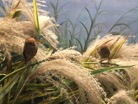 黄河口生态旅游区鸟岛景点旅游景点图片
