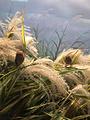 黄河口生态旅游区鸟岛景点