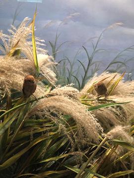 黄河口生态旅游区鸟岛景点的图片