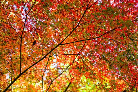 神埼郡旅游图片
