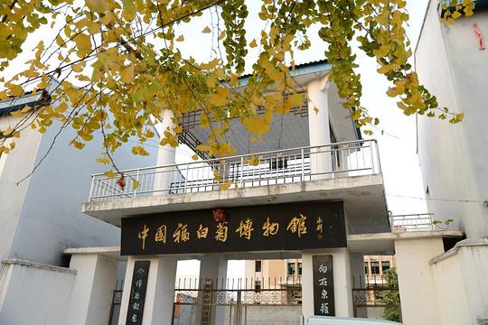 福白菊博物馆旅游景点图片