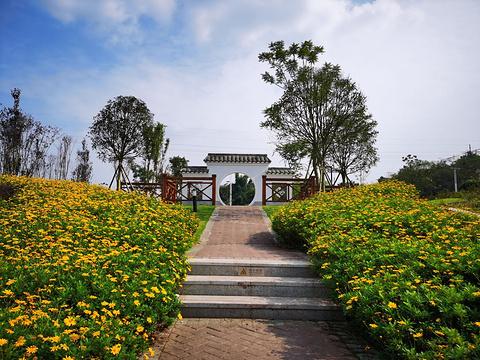 自贡花海的图片