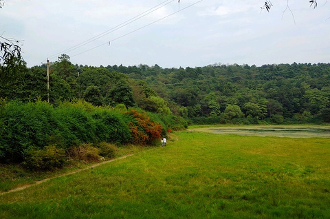 长坡岭森林公园的图片