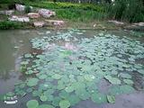 沭阳法治文化公园