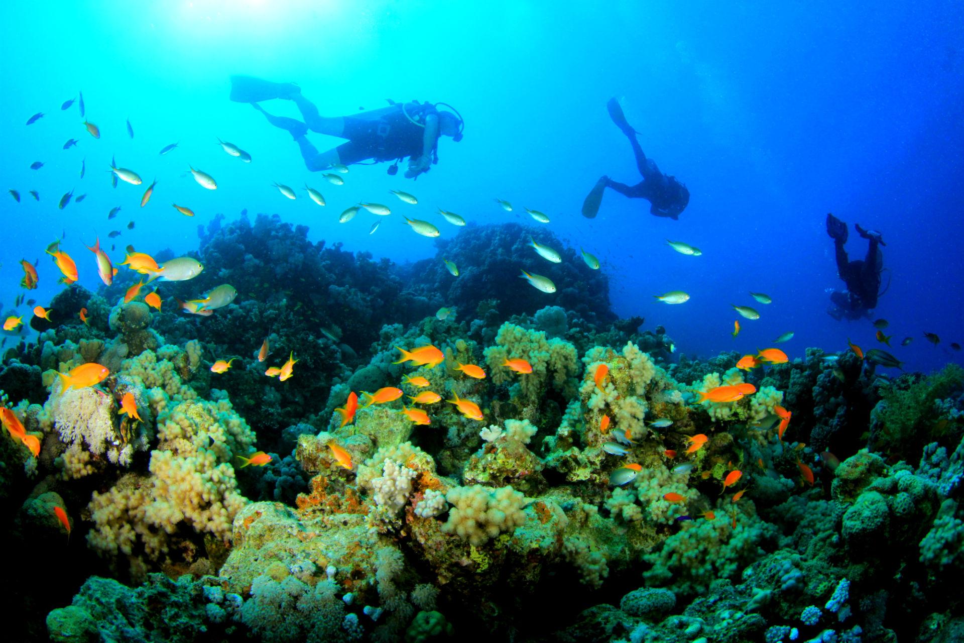 杜马盖地潜水3日线路