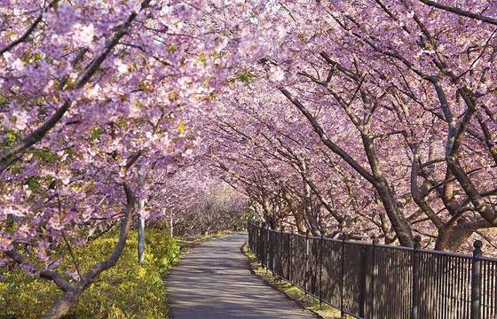 王陵公园旅游景点图片