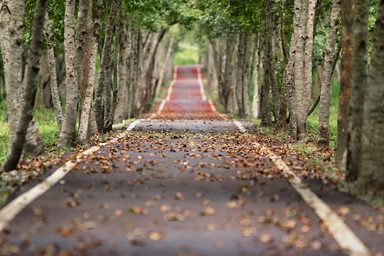 长坡岭森林公园旅游景点图片