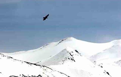 木孜塔格峰的图片