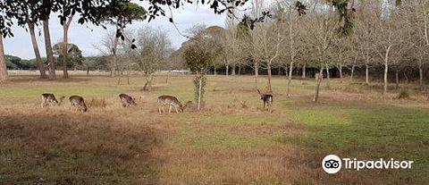 Ente Parco Regionale Migliarino San Rossore Massaciuccoli