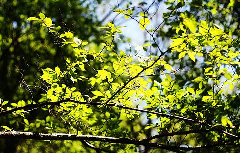 金龙山国家森林公园