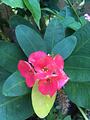 西双版纳热带花卉园-旅游购物区