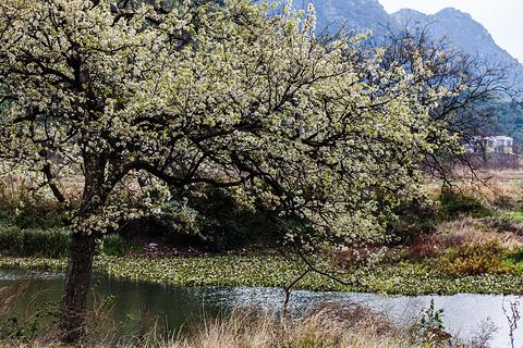 桃花江的图片