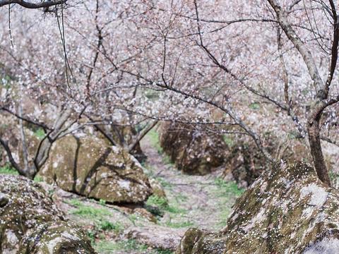 大坪山旅游景点图片
