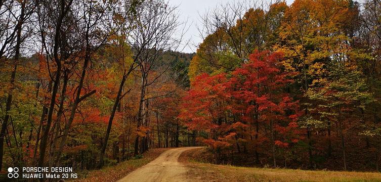 白石山国家森林公园旅游景点图片
