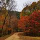 白石山国家森林公园