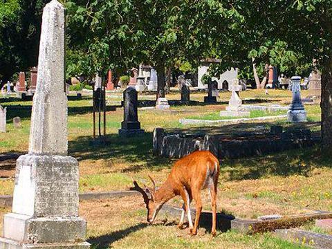 罗斯湾公墓旅游景点图片